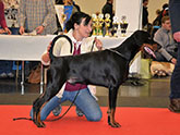 http://www.the-dobermann.com/males/5840-boss-baltic-residence